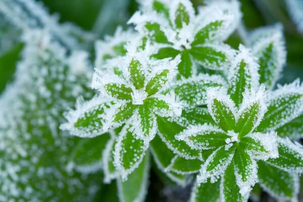 A Record Breaking Winter:  Will Our Plants Survive?