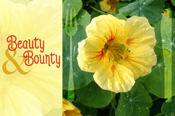 The Incredible Edible Landscape: Beauty and Bounty