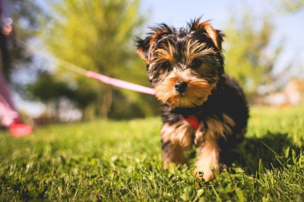 Planting for Dogs:  Every Day's a Dog Day this Summer