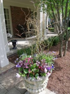 Container Gardening:  Small Spaces, Big Smiles