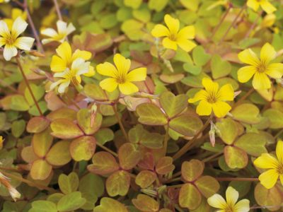 Highlights in the Garden: Going for Gold Foliage
