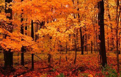 fall landscaping mi