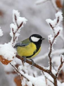 Winter Gardening:  Dressing Up for the Holidays!