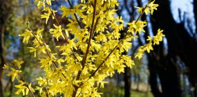Spring Color:  Bulbs and Other Early Bloomers