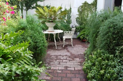 Time for Change: When to Replace Your Landscape Plants
