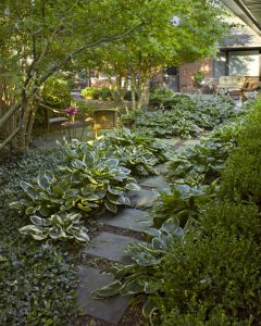 Shade Perennials in the Landscape